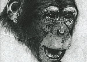 Chapter 13. Intelligence: did my great...great  grandfather think like an ape?